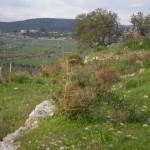 Donnagona